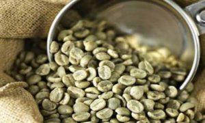 پخش دانه قهوه