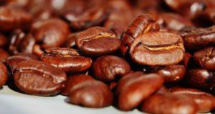 واردکننده دانه قهوه خام روبوستا اصفهان
