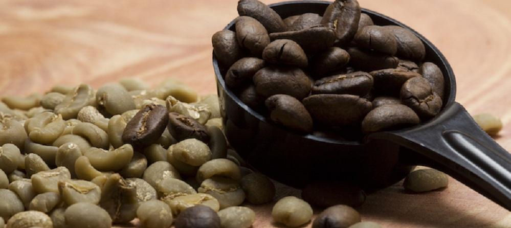 دانه قهوه روبوستا پر کافئین عمده